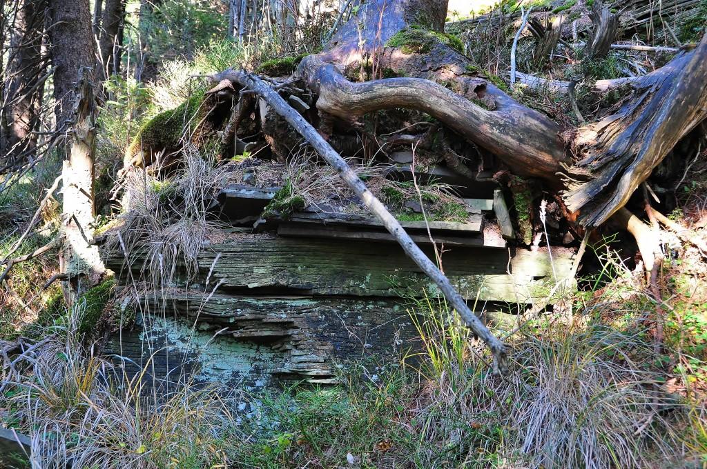 Kámen a stromy, to je příroda v okolí Čertova mlýna.