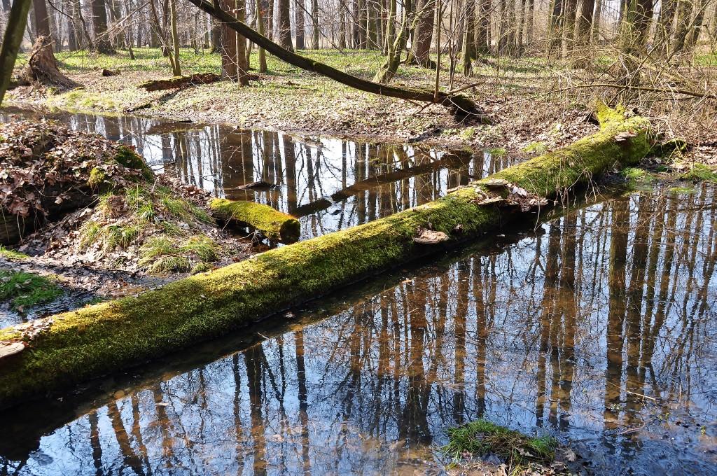 Lužní lesy v Poodří.