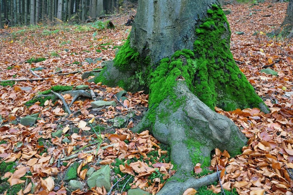 Bukovými lesy pod horou Smrk protéká Bučací potok.