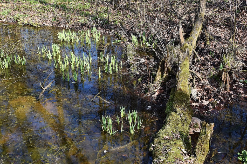 Životodárná řeka Odra vytváří podmínky pro život rostlin a živočichů