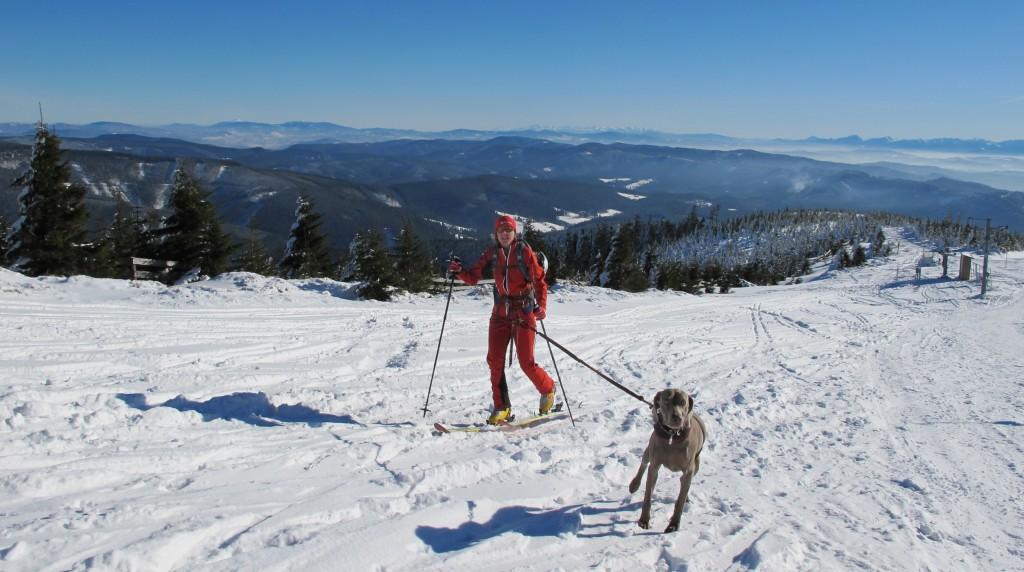 Některým skialpinistům pomůže zdolat vrchol i tažný pes.