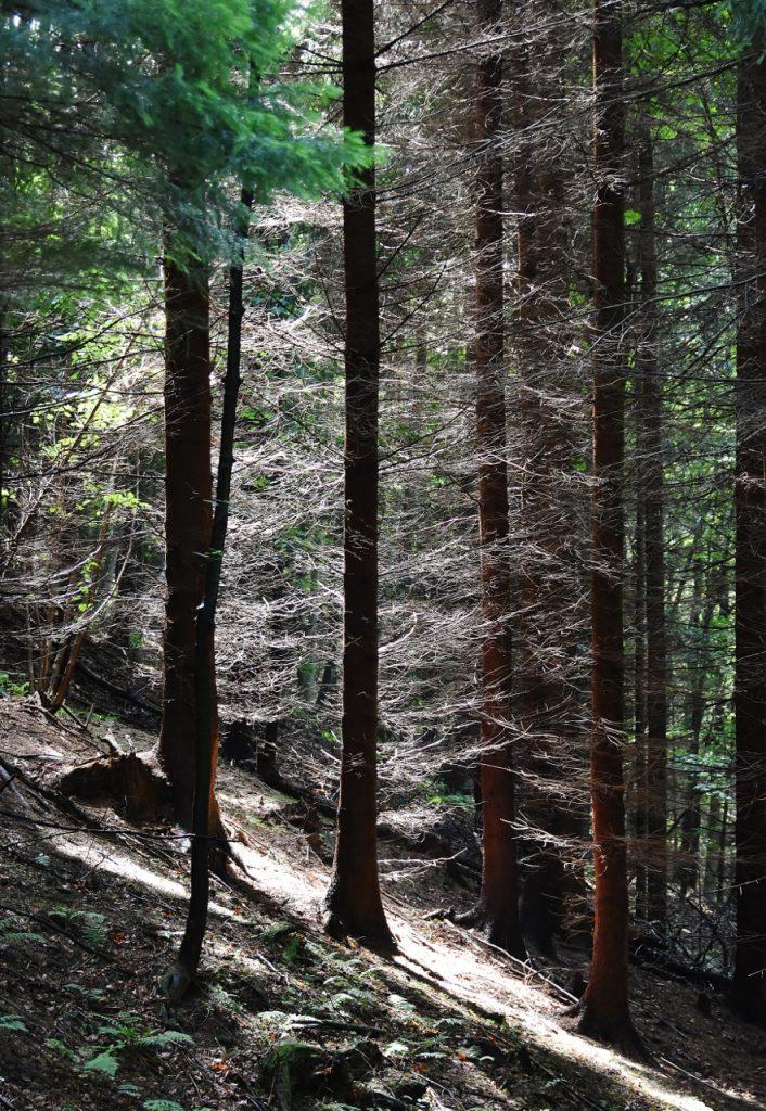 Les prozářený sluncem.