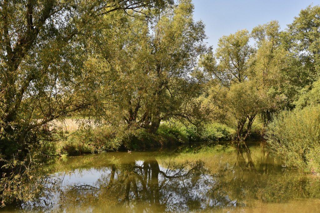 Bartošovické rybníky.
