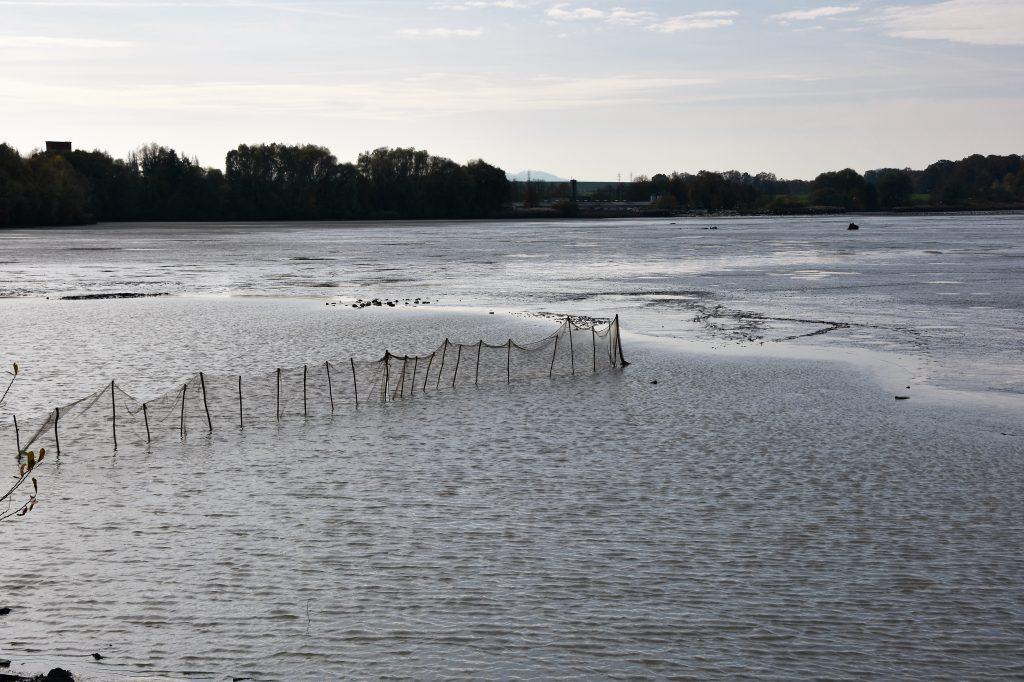 Rybníky poté, co rybáři vytáhli špunt.