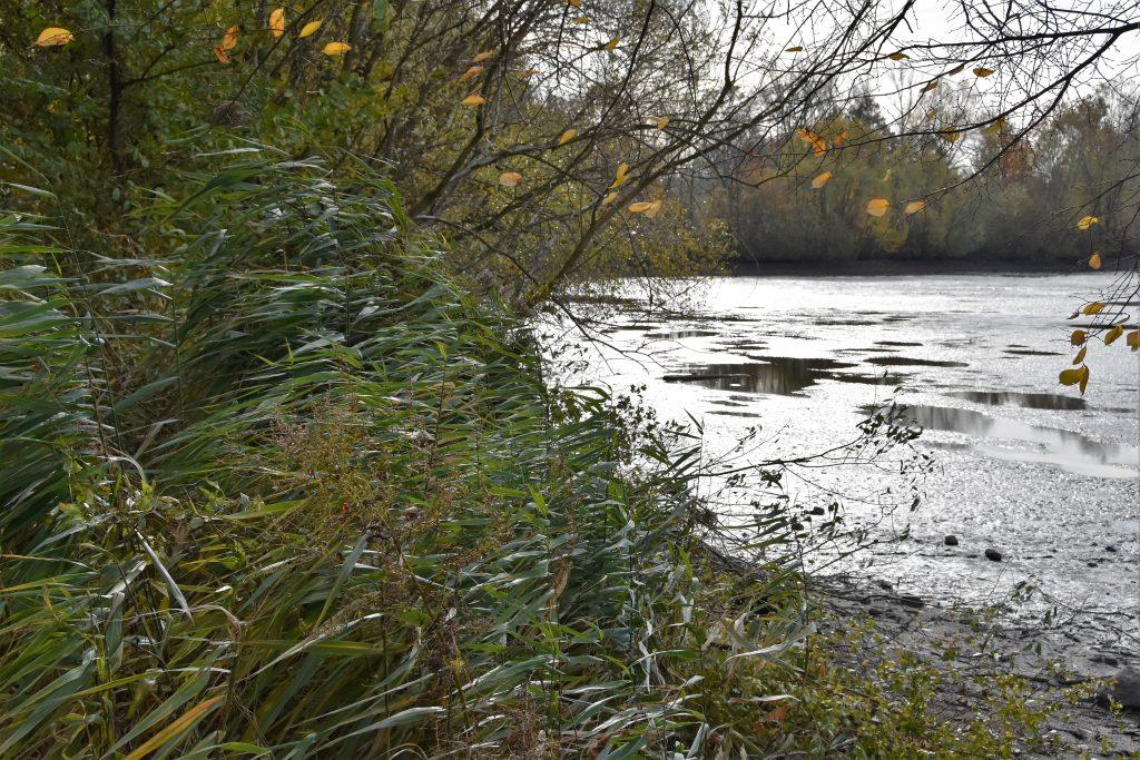 Krajina kolem Bartošovických rybníků láká fotografy.