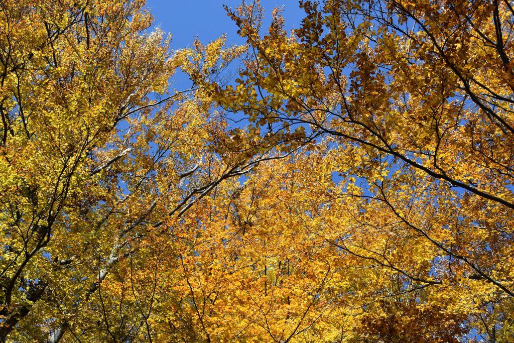 Podzim na Těšínsku