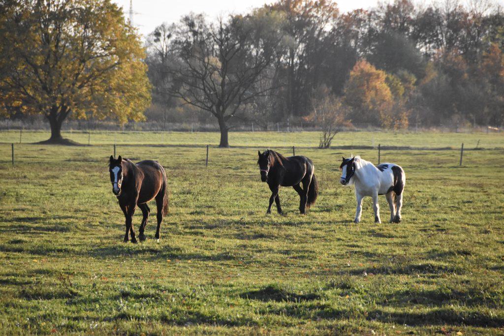 Volně se pasoucí koně, jak je zachytil fotoaparát...